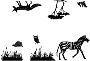 ANIMALS_zebra